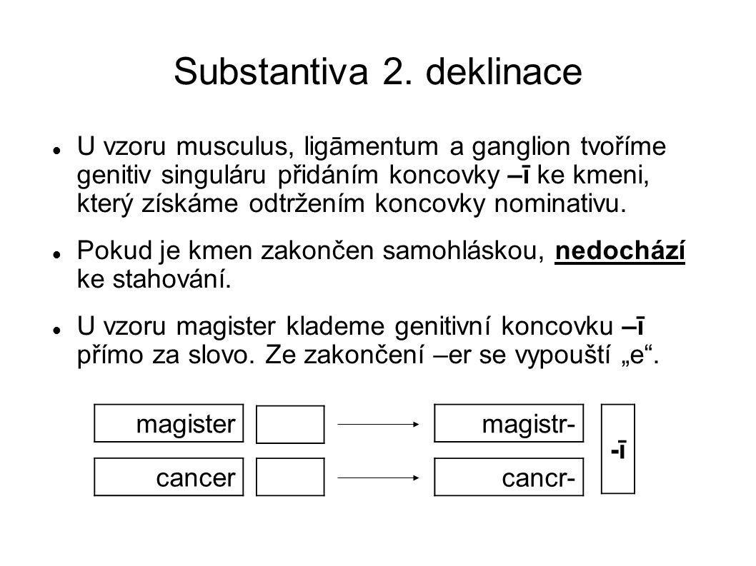 Substantiva 2.deklinace Následuje několik příkladů s těmito substantivy: condylus, ī, m.