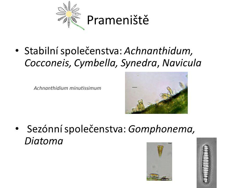 Prameniště Stabilní společenstva: Achnanthidum, Cocconeis, Cymbella, Synedra, Navicula Achnanthidium minutissimum Sezónní společenstva: Gomphonema, Diatoma