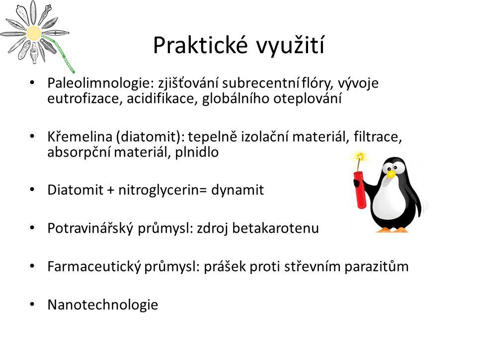 Praktické využití Paleolimnologie: zjišťování subrecentní flóry, vývoje eutrofizace, acidifikace, globálního oteplování Křemelina (diatomit): tepelně izolační materiál, filtrace, absorpční materiál, plnidlo Diatomit + nitroglycerin= dynamit Potravinářský průmysl: zdroj betakarotenu Farmaceutický průmysl: prášek proti střevním parazitům Nanotechnologie