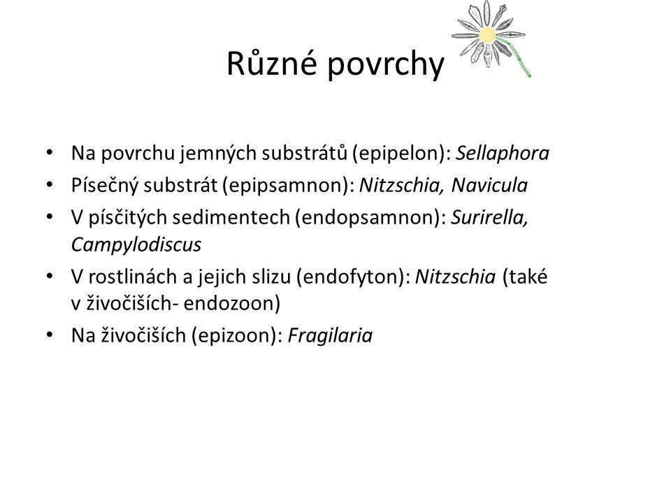 Různé povrchy Na povrchu jemných substrátů (epipelon): Sellaphora Písečný substrát (epipsamnon): Nitzschia, Navicula V písčitých sedimentech (endopsamnon): Surirella, Campylodiscus V rostlinách a jejich slizu (endofyton): Nitzschia (také v živočiších- endozoon) Na živočiších (epizoon): Fragilaria