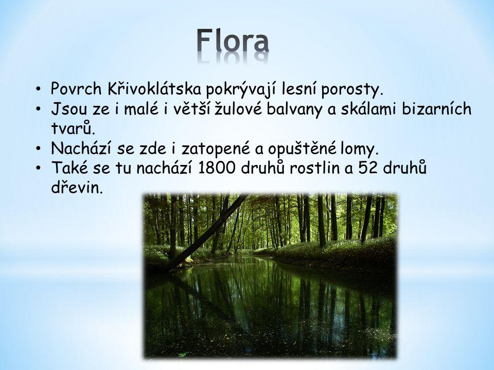 Povrch Křivoklátska pokrývají lesní porosty. Jsou ze i malé i větší žulové balvany a skálami bizarních tvarů. Nachází se zde i zatopené a opuštěné lom