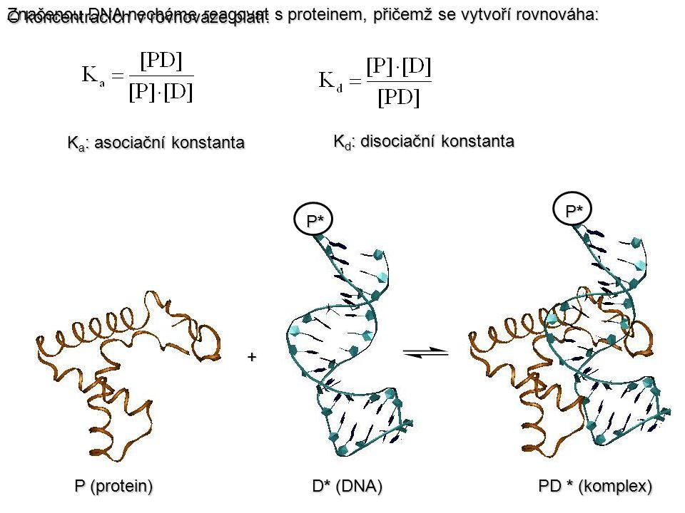 P*P*P*P* P*P*P*P* P (protein) D* (DNA) PD * (komplex) Značenou DNA necháme reagovat s proteinem, přičemž se vytvoří rovnováha: + O koncentracích v rov