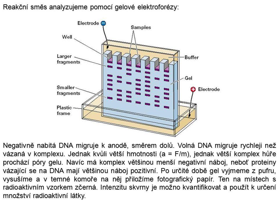 Reakční směs analyzujeme pomocí gelové elektroforézy: Negativně nabitá DNA migruje k anodě, směrem dolů. Volná DNA migruje rychleji než vázaná v kompl