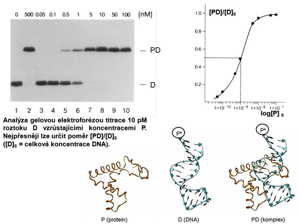 PD D [PD]/[D] 0 log[P] 0 Analýza gelovou elektroforézou titrace 10 pM roztoku D vzrůstajícími koncentracemi P. Nejpřesněji lze určit poměr [PD]/[D] 0