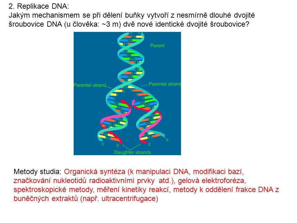 2. Replikace DNA: Jakým mechanismem se při dělení buňky vytvoří z nesmírně dlouhé dvojité šroubovice DNA (u člověka: ~3 m) dvě nové identické dvojité