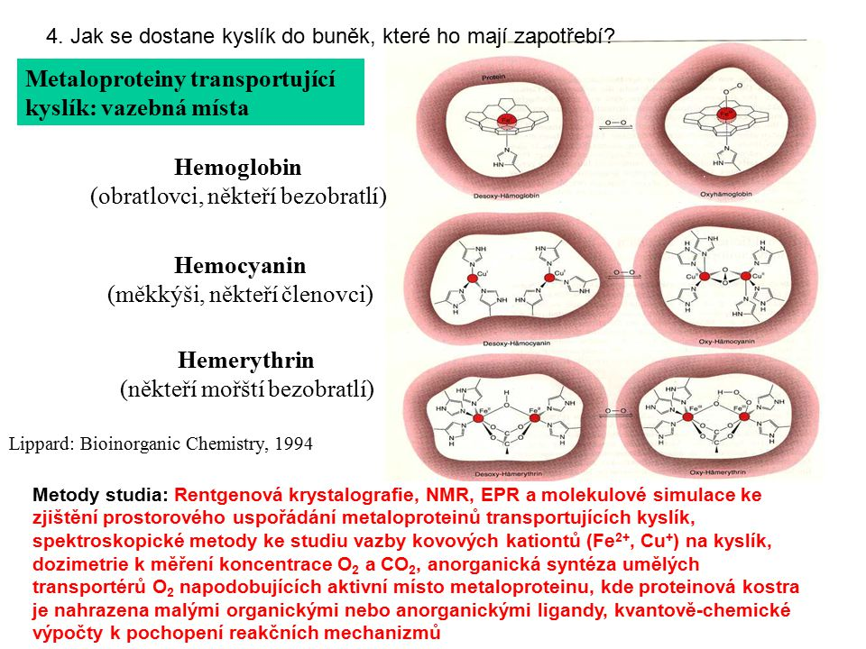 Metody studia: Rentgenová krystalografie, NMR, EPR a molekulové simulace ke zjištění prostorového uspořádání metaloproteinů transportujících kyslík, s