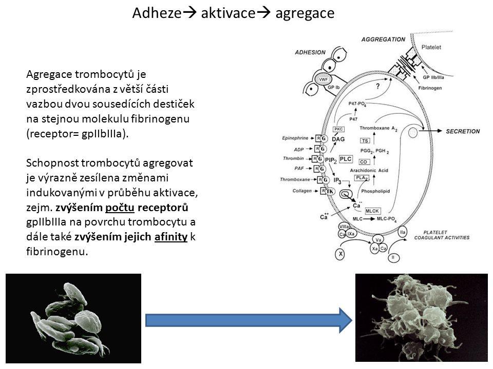 Adheze  aktivace  agregace Agregace trombocytů je zprostředkována z větší části vazbou dvou sousedících destiček na stejnou molekulu fibrinogenu (re