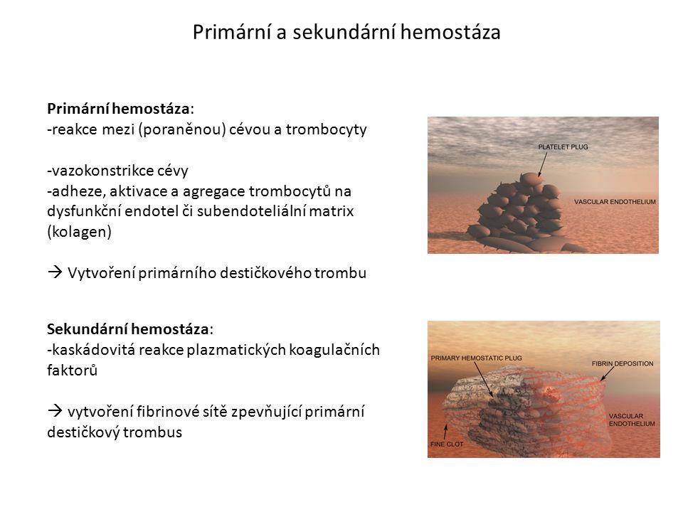 Primární a sekundární hemostáza Primární hemostáza: -reakce mezi (poraněnou) cévou a trombocyty -vazokonstrikce cévy -adheze, aktivace a agregace trom