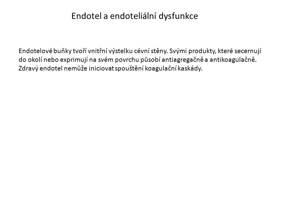 Endotel a endoteliální dysfunkce Endotelové buňky tvoří vnitřní výstelku cévní stěny. Svými produkty, které secernují do okolí nebo exprimují na svém