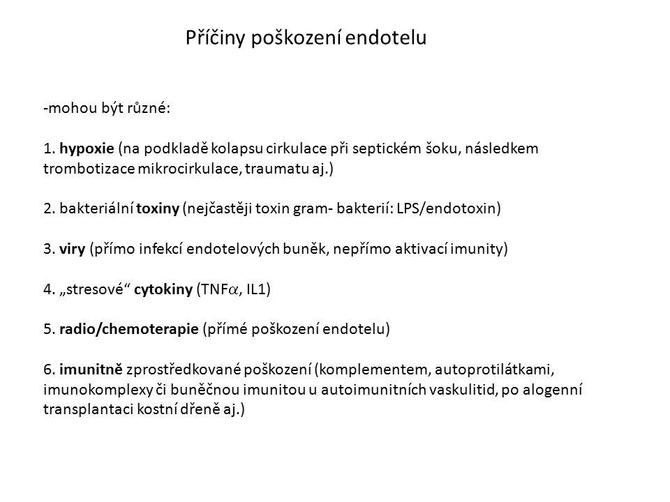 Příčiny poškození endotelu -mohou být různé: 1. hypoxie (na podkladě kolapsu cirkulace při septickém šoku, následkem trombotizace mikrocirkulace, trau