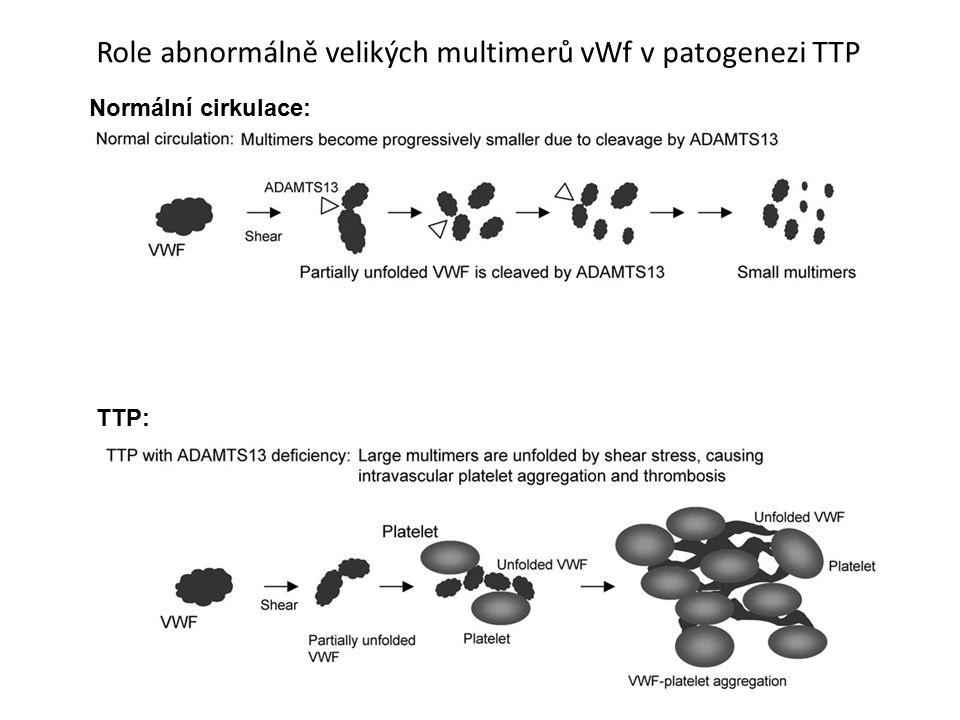Role abnormálně velikých multimerů vWf v patogenezi TTP Normální cirkulace: TTP: