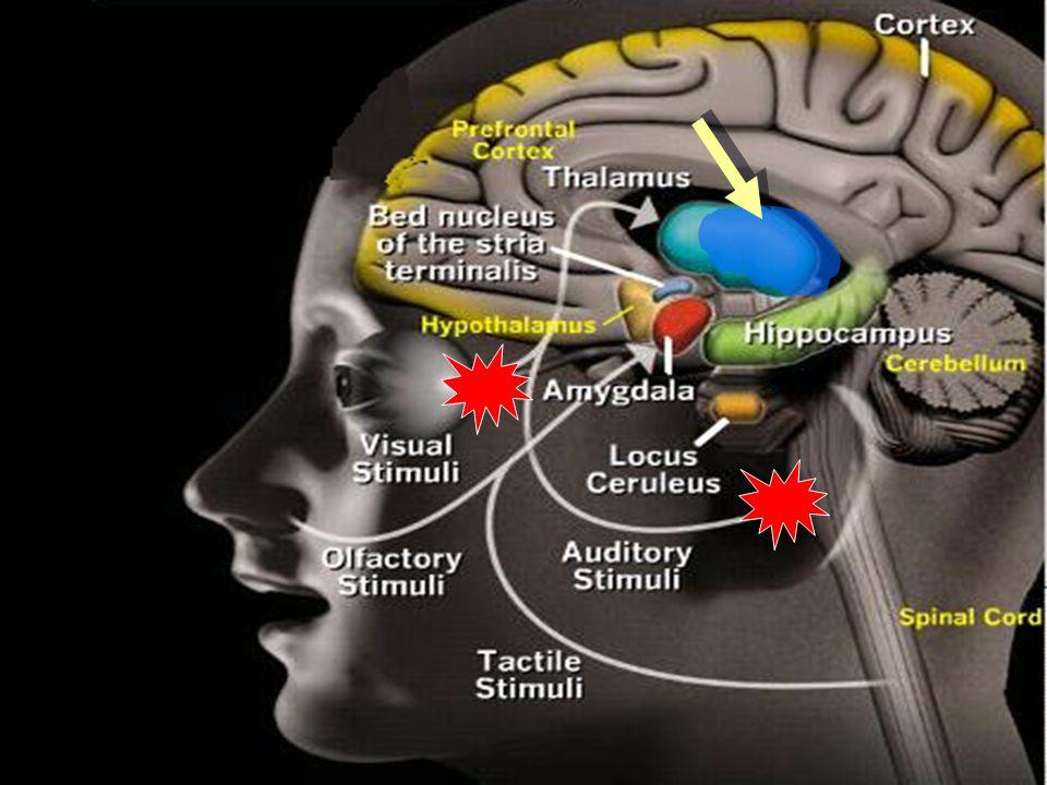 Anxiety disorders neurobiology SAD, GAD – cortex.Amygdala, BNST SAD, GAD – cortex.