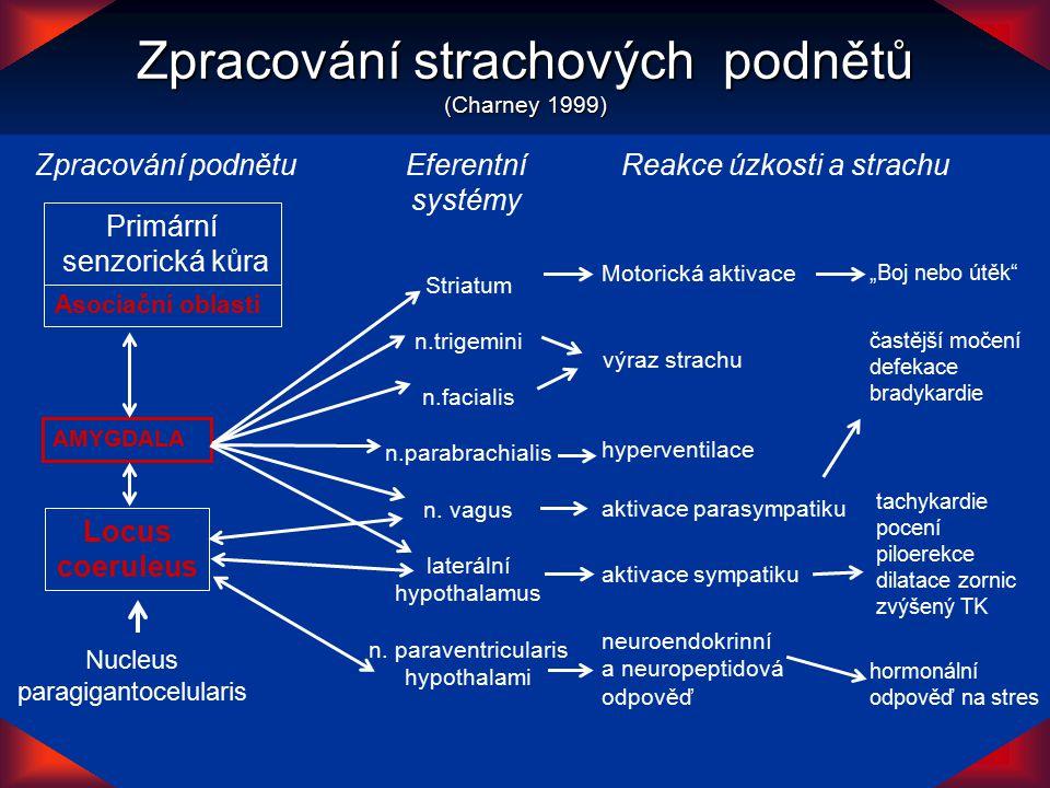 AMYGDALA Locus coeruleus Primární senzorická kůra Asociační oblasti Zpracování podnětuEferentní systémy Nucleus paragigantocelularis Striatum n.trigem