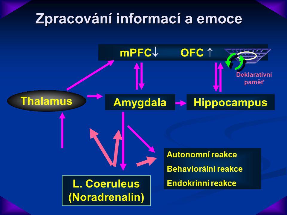 Zpracování informací a emoce Emoční stimulus AmygdalaHippocampus mPFC  OFC  Thalamus Autonomní reakce Behaviorální reakce Endokrinní reakce Deklarat