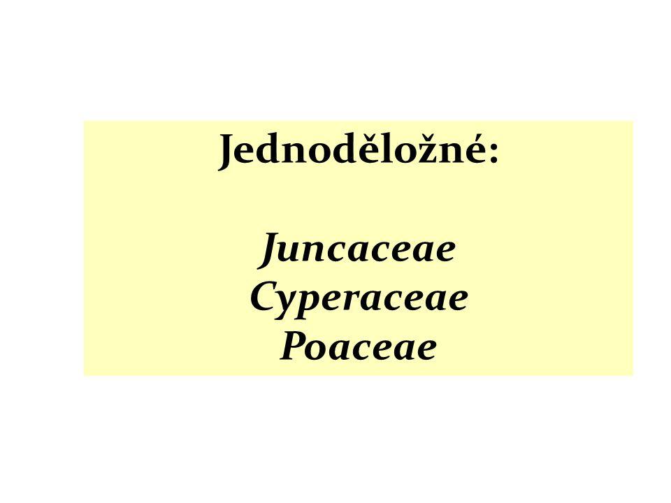 Jednoděložné: Juncaceae Cyperaceae Poaceae
