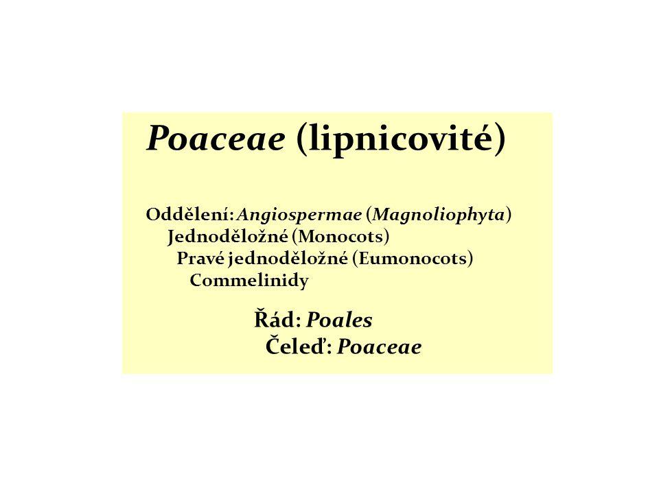 Poaceae (lipnicovité) Oddělení: Angiospermae (Magnoliophyta) Jednoděložné (Monocots) Pravé jednoděložné (Eumonocots) Commelinidy Řád: Poales Čeleď: Po