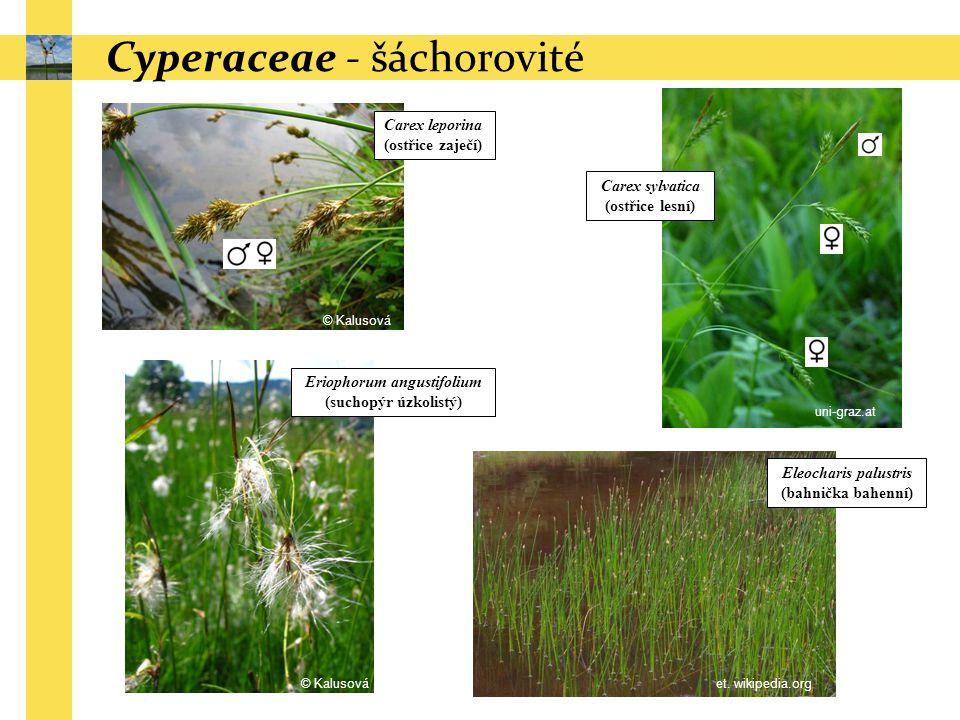 Carex leporina (ostřice zaječí) Carex sylvatica (ostřice lesní) Cyperaceae - šáchorovité Eriophorum angustifolium (suchopýr úzkolistý) Eleocharis palu