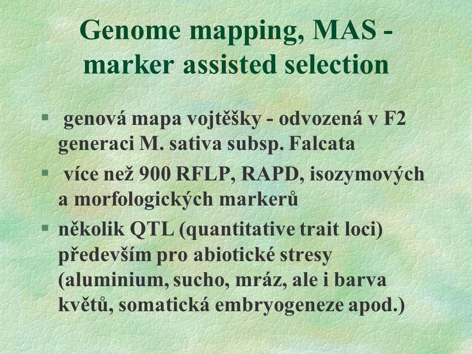 Genome mapping, MAS - marker assisted selection § genová mapa vojtěšky - odvozená v F2 generaci M.