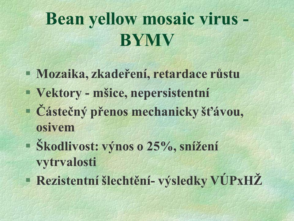 Bean yellow mosaic virus - BYMV §Mozaika, zkadeření, retardace růstu §Vektory - mšice, nepersistentní §Částečný přenos mechanicky šťávou, osivem §Škodlivost: výnos o 25%, snížení vytrvalosti §Rezistentní šlechtění- výsledky VÚPxHŽ