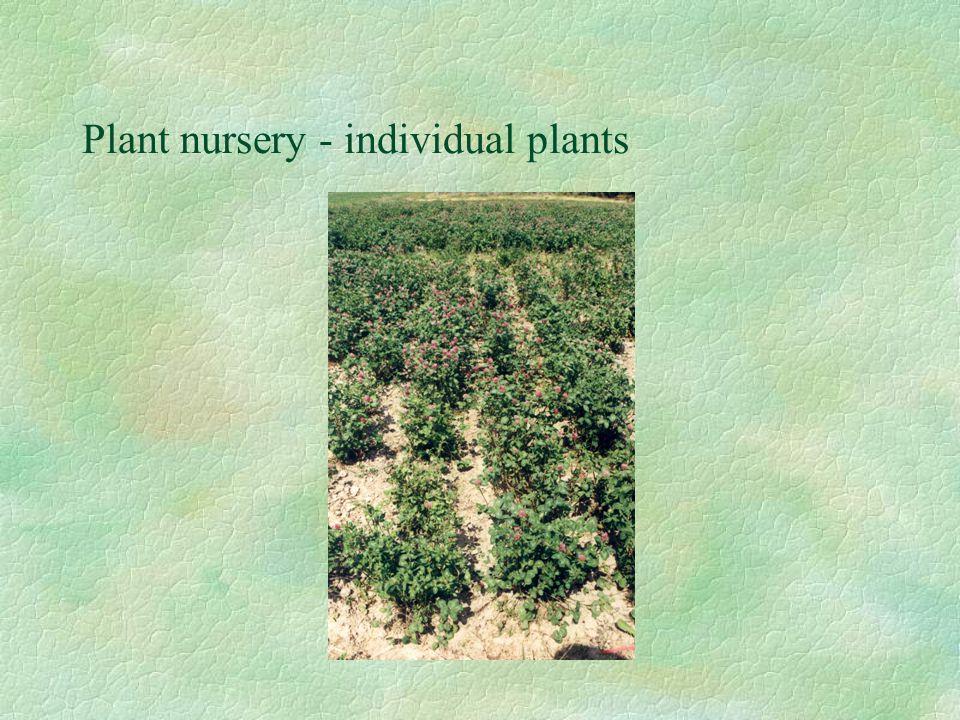 Plant nursery - individual plants