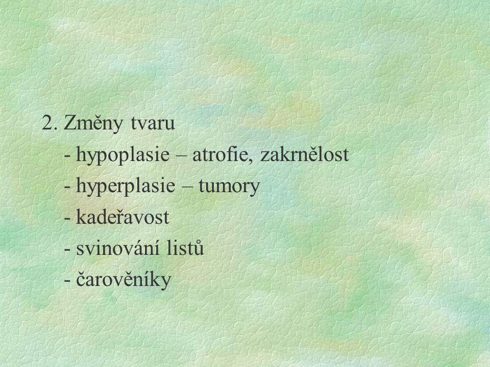 2. Změny tvaru - hypoplasie – atrofie, zakrnělost - hyperplasie – tumory - kadeřavost - svinování listů - čarověníky