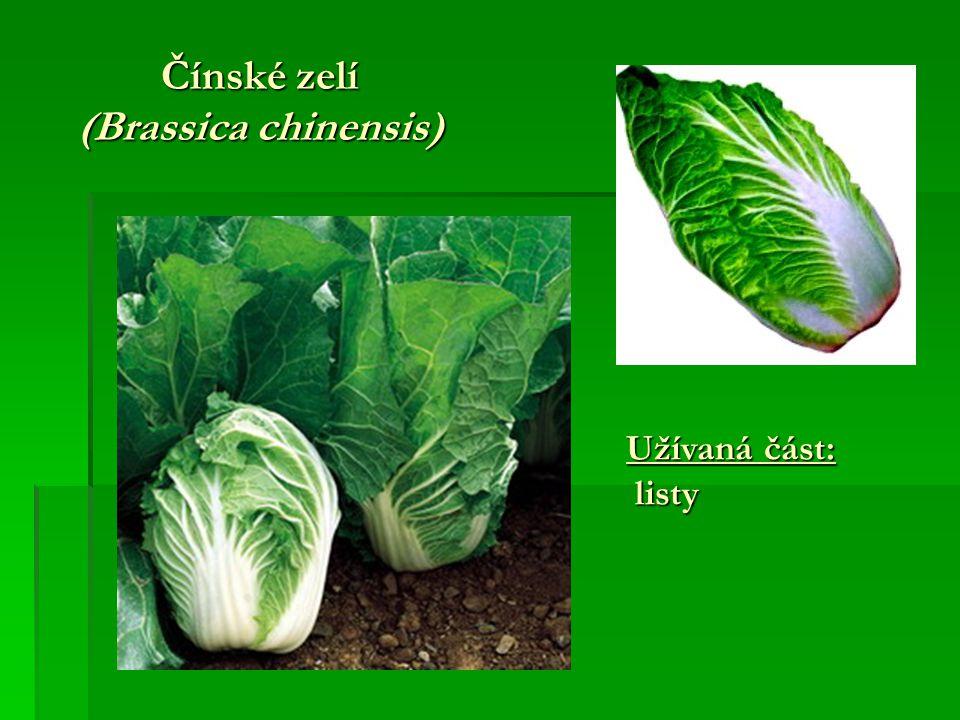 Čínské zelí (Brassica chinensis) Užívaná část: listy listy