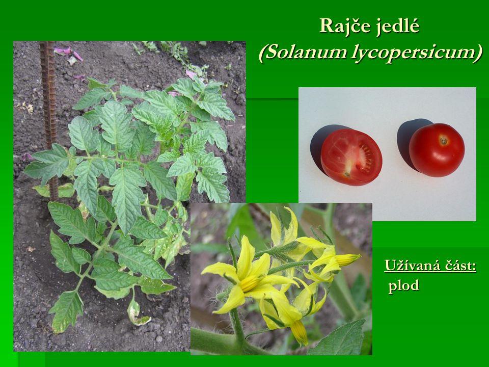 Rajče jedlé (Solanum lycopersicum) Užívaná část: plod plod