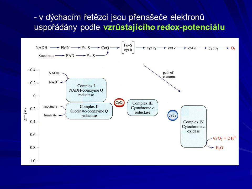 - v dýchacím řetězci jsou přenašeče elektronů uspořádány podle vzrůstajícího redox-potenciálu