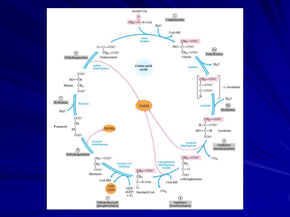 Mechanismus syntézy ATP- Binding change mechanismus