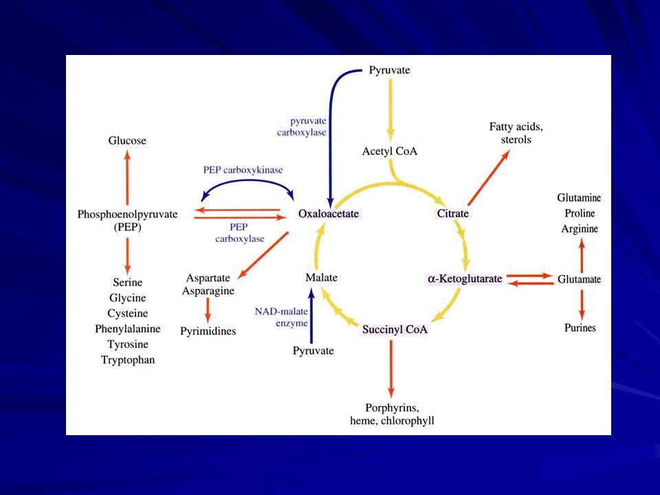 Komplex I = NADH-ubichinonreduktáza NADH + CoQ ox  NAD + + CoQ red