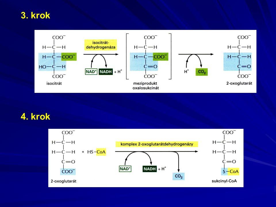 Komplex II = sukcinát-ubichinonreduktáza FADH 2 + CoQ ox  FAD + CoQ red
