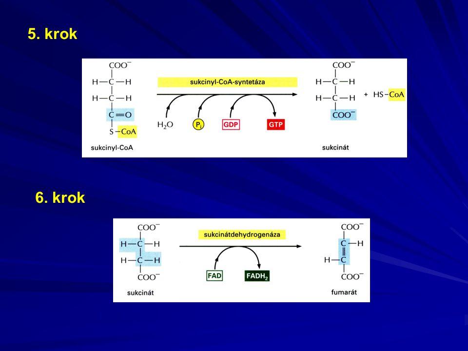 Komplex III = ubichinol-cytochrom c –reduktáza CoQ red + cytochrom c ox  CoQ ox + cytochrom c red