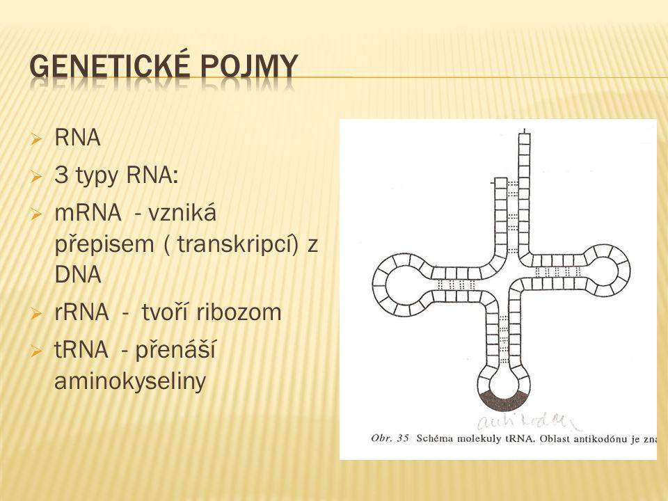 RNA  3 typy RNA:  mRNA - vzniká přepisem ( transkripcí) z DNA  rRNA - tvoří ribozom  tRNA - přenáší aminokyseliny