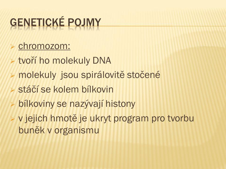  chromozom:  tvoří ho molekuly DNA  molekuly jsou spirálovitě stočené  stáčí se kolem bílkovin  bílkoviny se nazývají histony  v jejich hmotě je ukryt program pro tvorbu buněk v organismu
