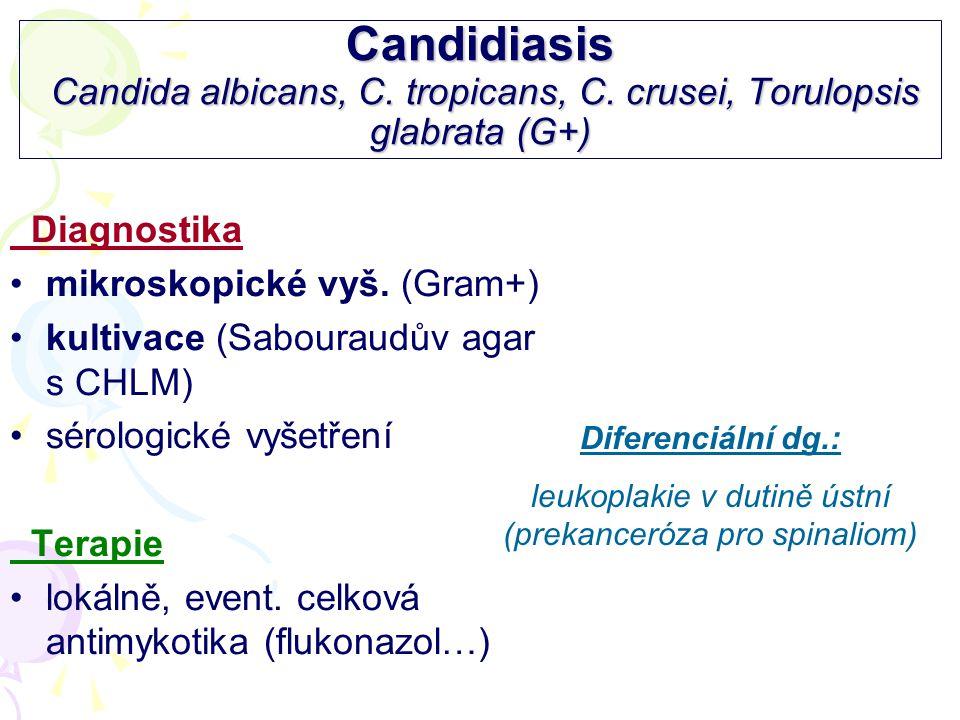 Candidiasis Candida albicans, C. tropicans, C. crusei, Torulopsis glabrata (G+) Diagnostika mikroskopické vyš. (Gram+) kultivace (Sabouraudův agar s C