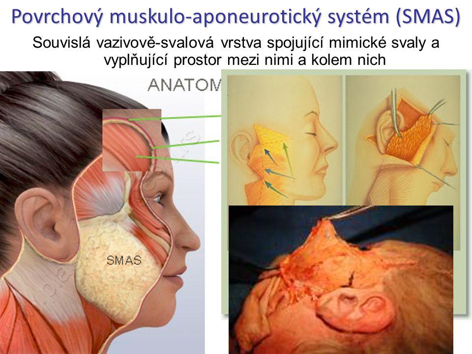 Souvislá vazivově-svalová vrstva spojující mimické svaly a vyplňující prostor mezi nimi a kolem nich Povrchový muskulo-aponeurotický systém (SMAS)