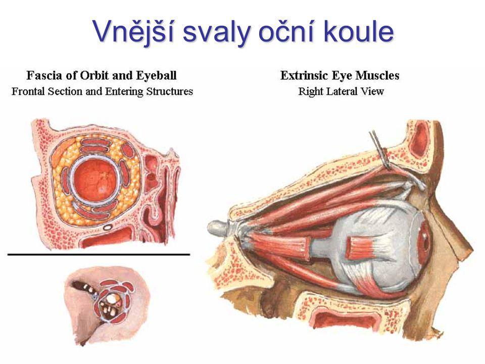 Vnější svaly oční koule