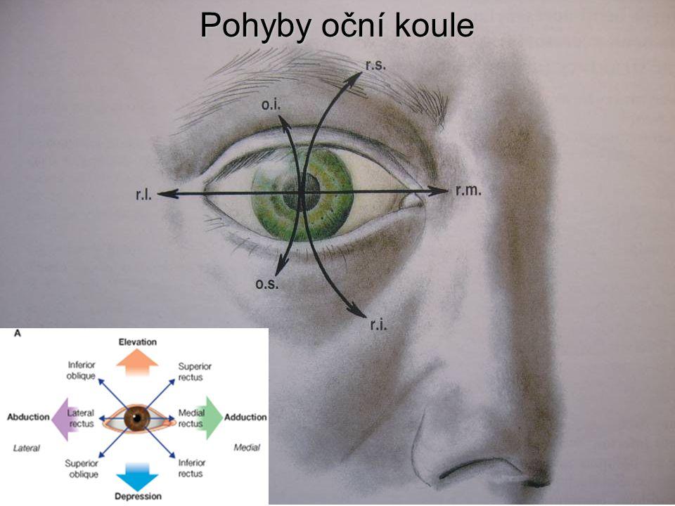 Pohyby oční koule
