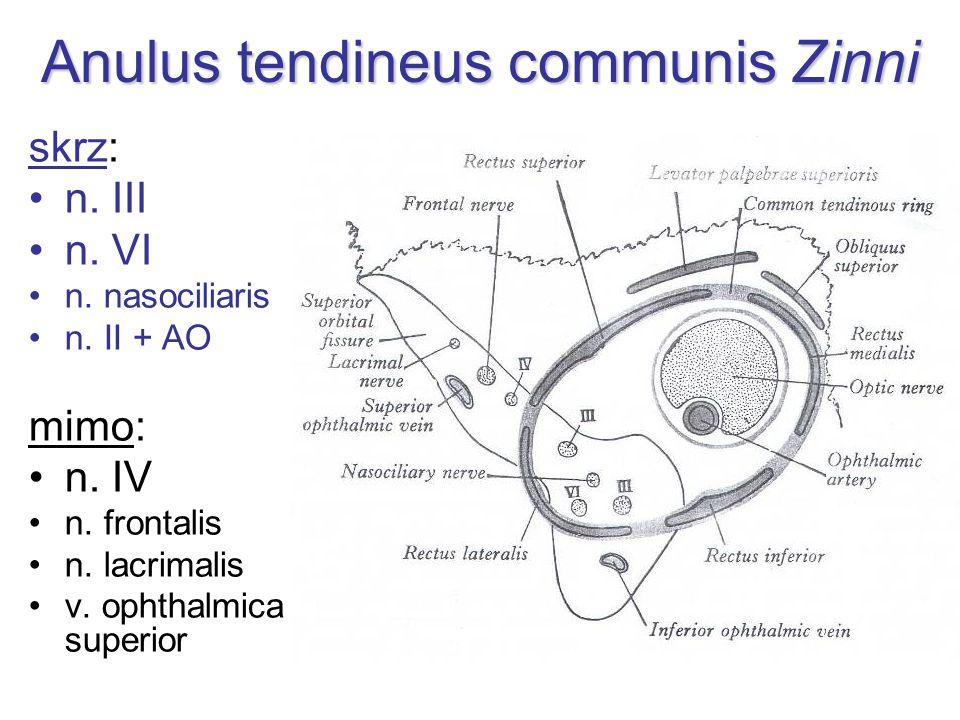 Anulus tendineus communis Zinni skrz: n. III n. VI n. nasociliaris n. II + AO mimo: n. IV n. frontalis n. lacrimalis v. ophthalmica superior