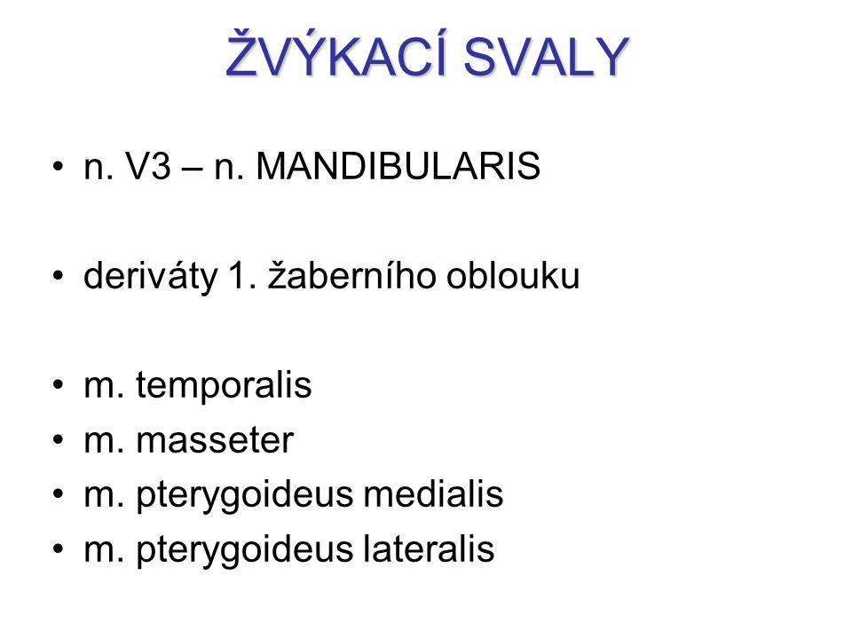 ŽVÝKACÍ SVALY n. V3 – n. MANDIBULARIS deriváty 1. žaberního oblouku m. temporalis m. masseter m. pterygoideus medialis m. pterygoideus lateralis