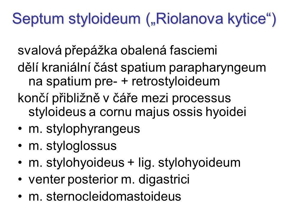 "Septum styloideum (""Riolanova kytice"") svalová přepážka obalená fasciemi dělí kraniální část spatium parapharyngeum na spatium pre- + retrostyloideum"