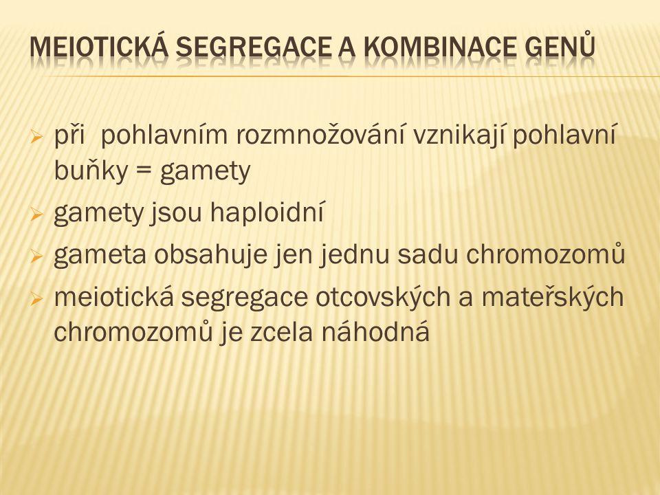  při pohlavním rozmnožování vznikají pohlavní buňky = gamety  gamety jsou haploidní  gameta obsahuje jen jednu sadu chromozomů  meiotická segregac