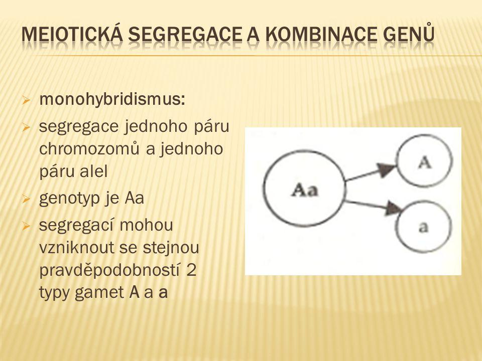  monohybridismus:  segregace jednoho páru chromozomů a jednoho páru alel  genotyp je Aa  segregací mohou vzniknout se stejnou pravděpodobností 2 t