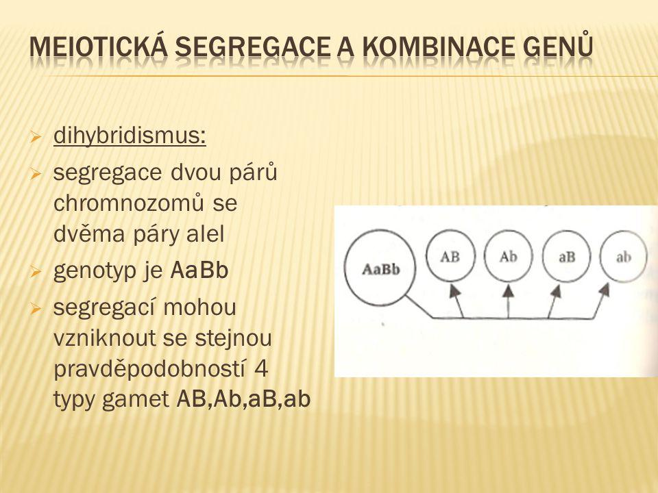  dihybridismus:  segregace dvou párů chromnozomů se dvěma páry alel  genotyp je AaBb  segregací mohou vzniknout se stejnou pravděpodobností 4 typy