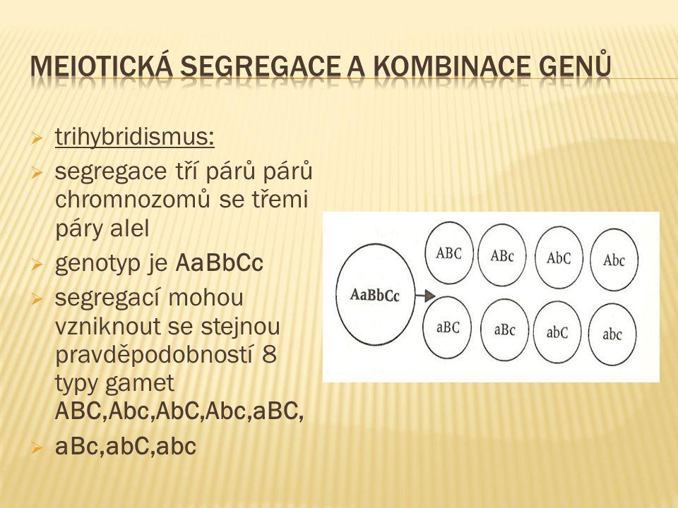  trihybridismus:  segregace tří párů párů chromnozomů se třemi páry alel  genotyp je AaBbCc  segregací mohou vzniknout se stejnou pravděpodobností