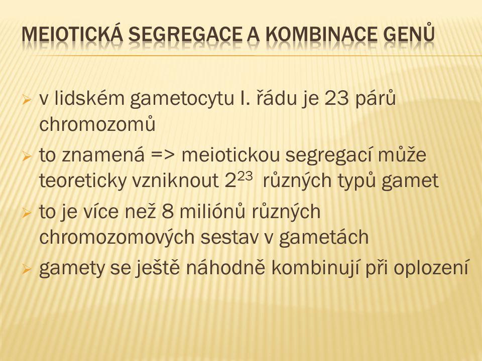  v lidském gametocytu I. řádu je 23 párů chromozomů  to znamená => meiotickou segregací může teoreticky vzniknout 2 23 různých typů gamet  to je ví