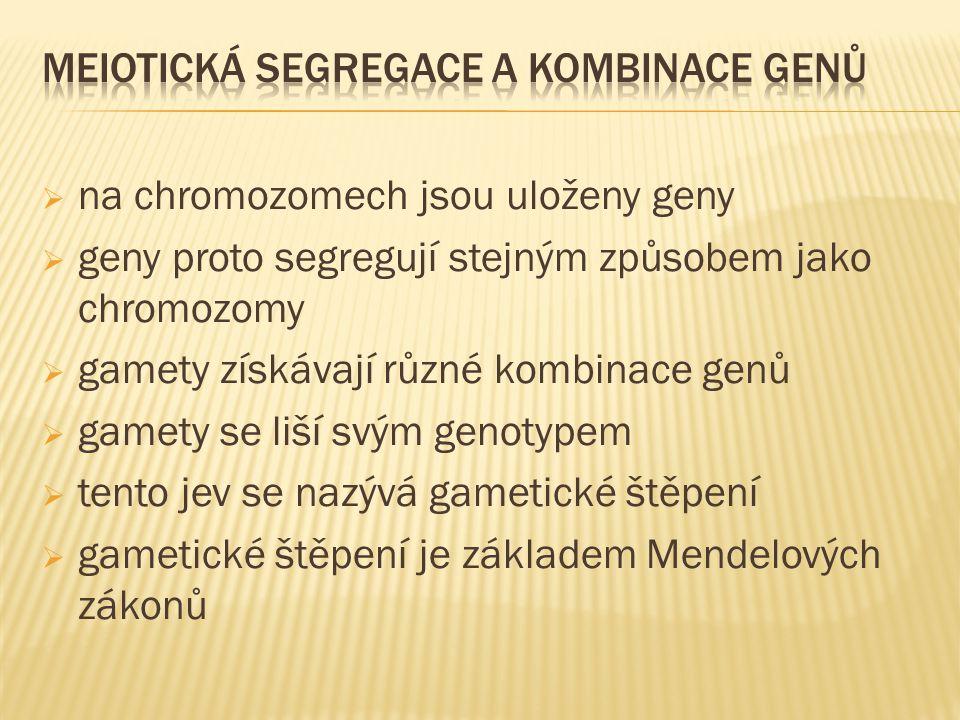  na chromozomech jsou uloženy geny  geny proto segregují stejným způsobem jako chromozomy  gamety získávají různé kombinace genů  gamety se liší s