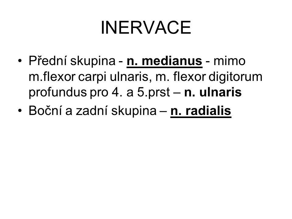 INERVACE Přední skupina - n. medianus - mimo m.flexor carpi ulnaris, m. flexor digitorum profundus pro 4. a 5.prst – n. ulnaris Boční a zadní skupina