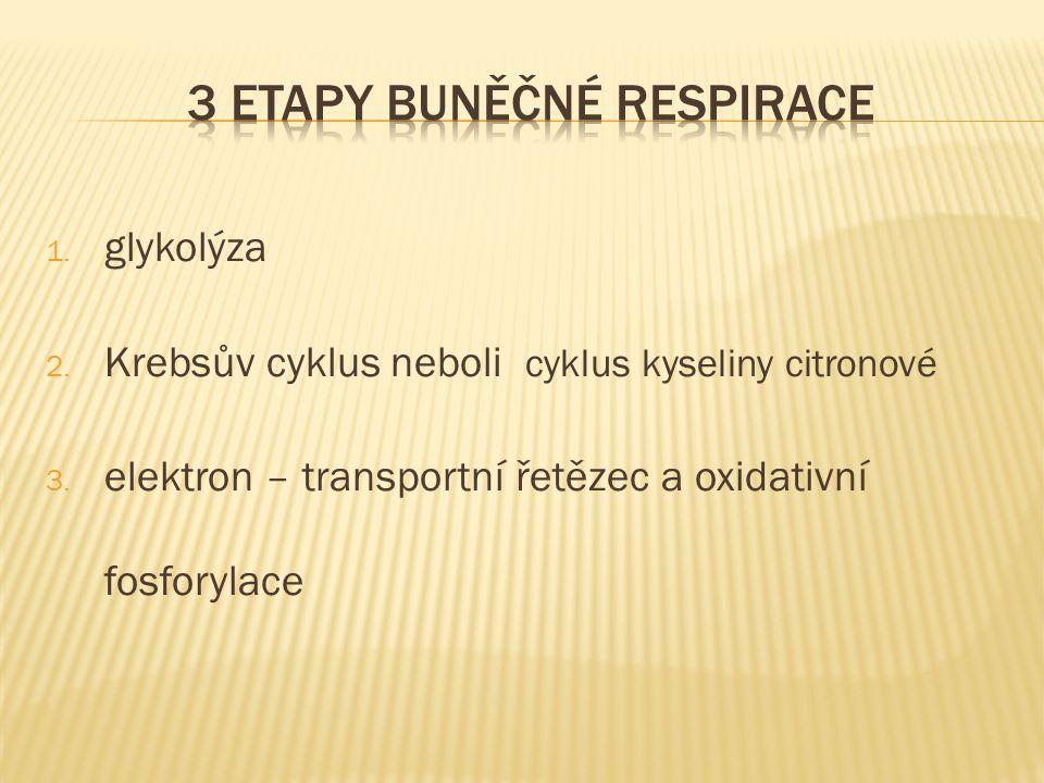 1. glykolýza 2. Krebsův cyklus neboli cyklus kyseliny citronové 3. elektron – transportní řetězec a oxidativní fosforylace