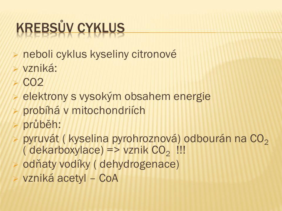  neboli cyklus kyseliny citronové  vzniká:  CO2  elektrony s vysokým obsahem energie  probíhá v mitochondriích  průběh:  pyruvát ( kyselina pyrohroznová) odbourán na CO 2 ( dekarboxylace) => vznik CO 2 !!.